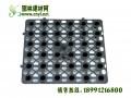 排水板|陕西省排塑料排水板